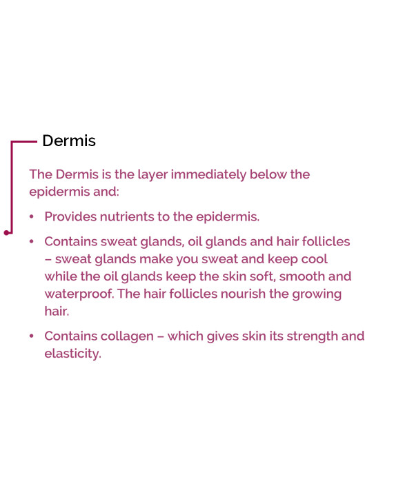 Dermis text