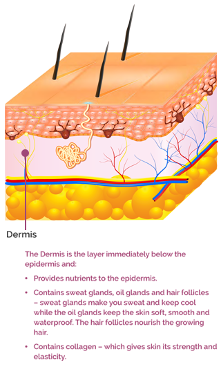 The Dermis skin later text mobile version