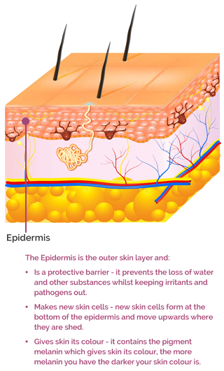 The Epidermis skin later text mobile version