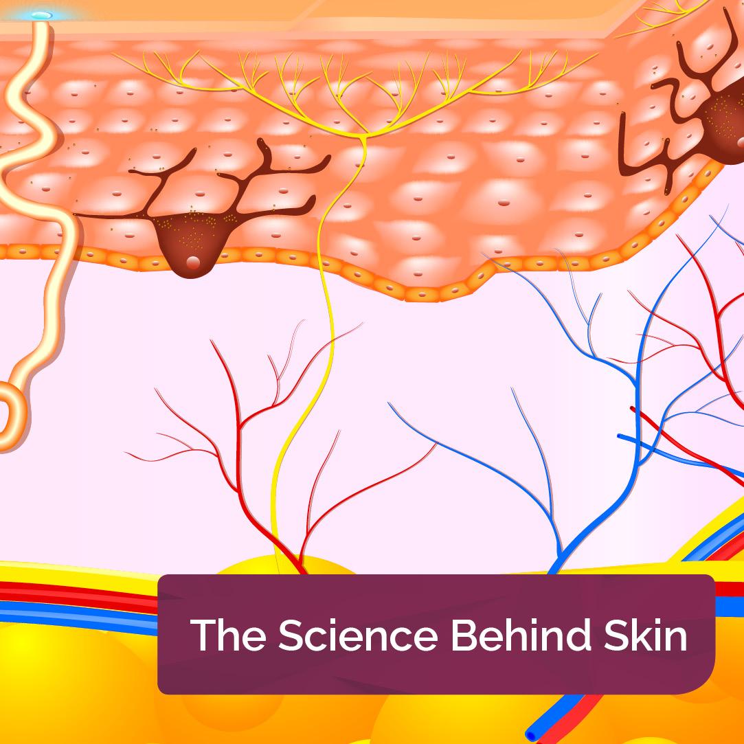 The Science Behind Skin