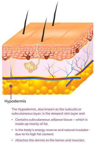 AproDerm Hypodermis mobile infographic